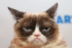 grumpy_cat.jpg.1440x960_q100_crop-scale_