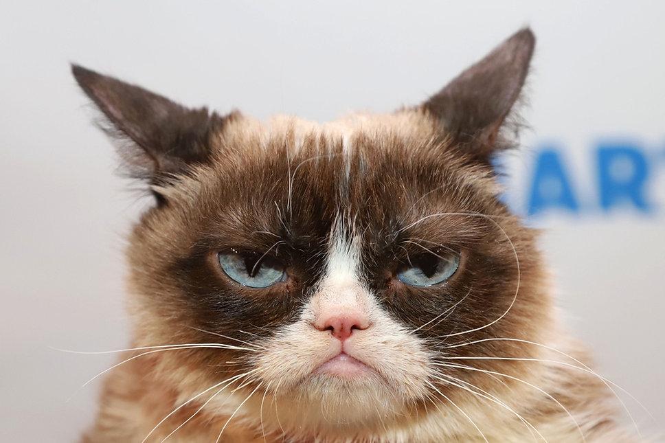 grumpy_cat.jpg.1440x960_q100_crop-scale_