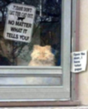 Dont let the Cat out..jpg