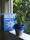 Bastille Day:  Blue custom books.jpg