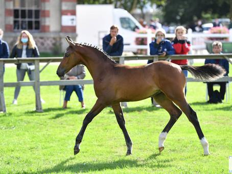 Championnat de France des Foals