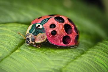 LadyBug (Large).png