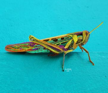 KarmaSirikogar_Grasshopper (Large).jpg