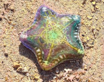 KarmaSirikogar_Starfish (Large).jpg