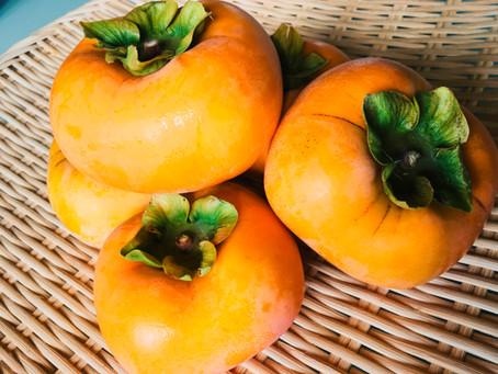 庄内柿、収穫始まりました♪