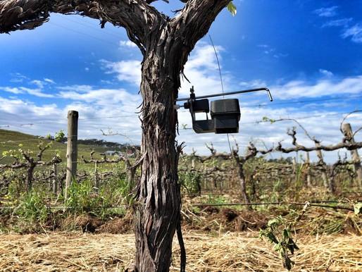 Deepening our understanding of vines