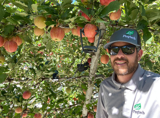 Apple growers: last call to influence fruits' size