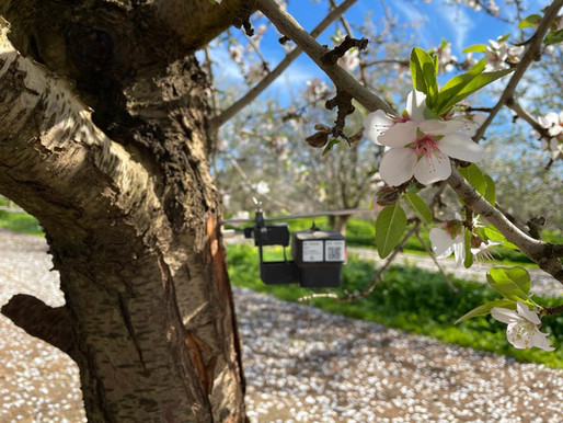 Australia: Sensors are blooming!