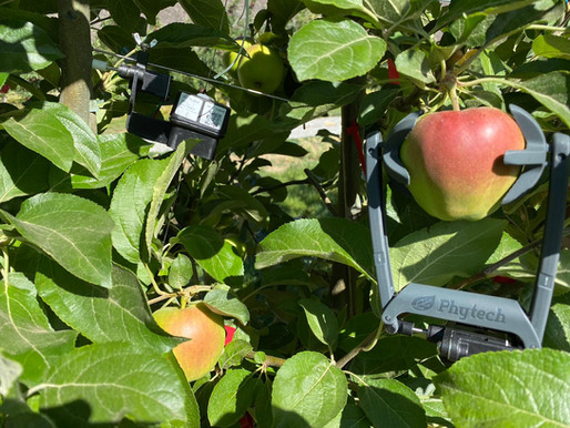 A game changer for apple growers
