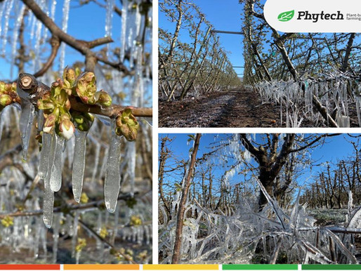 Frost protection  - wherever you are