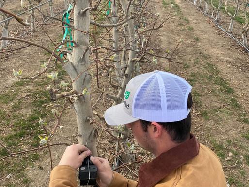 Apple Trees in Washington: We hear you!