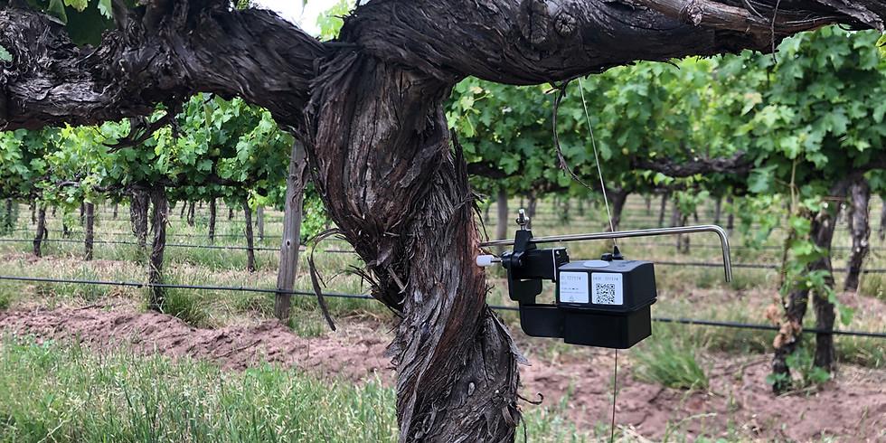Phytech for grape growers