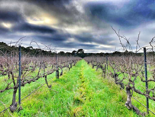 Connecting 130-years old vines to their growers