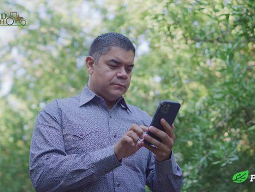 Phytech Success story: Sal Parra, Jr, Burford Ranch