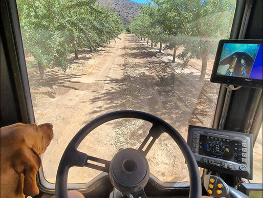"""Amanteco Almonds - """"Good 2021 harvest, trees looking good, and 25% water savings"""""""