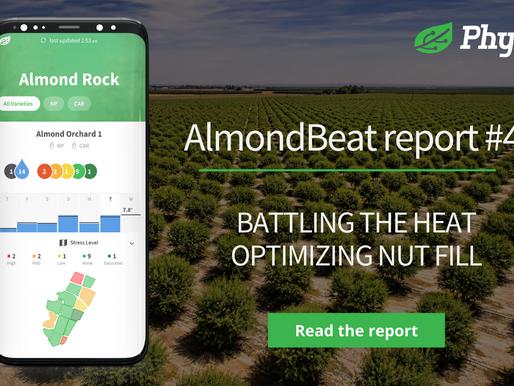 AlmondBeat Report#4: Battling the heat 🔥 while optimizing nut fill