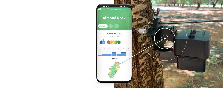 new-almond-sensor.png