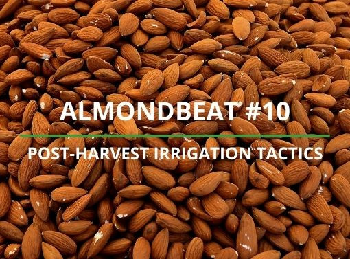 AlmondBeat #10: Post-harvest irrigation will define 2021 yields