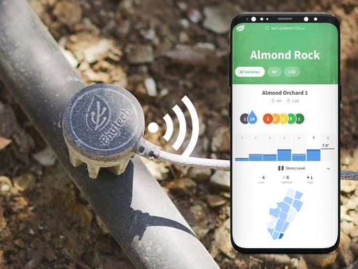 2021 AlmondBeat #2: Pressure check-up and optimizing nut size