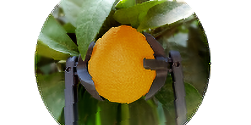 Phytech for citrus growers