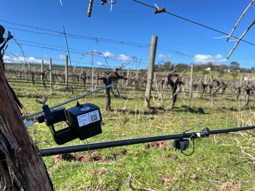 McLaren Vale: 180 years of experience and innovation