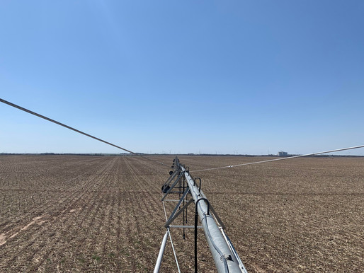 Cotton growers in Kansas - Here we go!