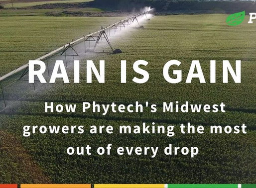 How our Midwest growers are leveraging the rain
