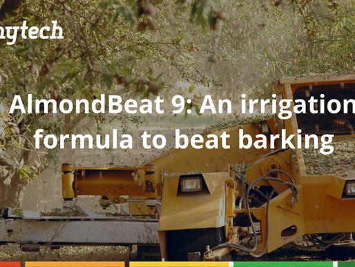 AlmondBeat 9: Avoid barking with this irrigation formula