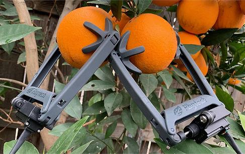 oranges-07-min (1).jpg