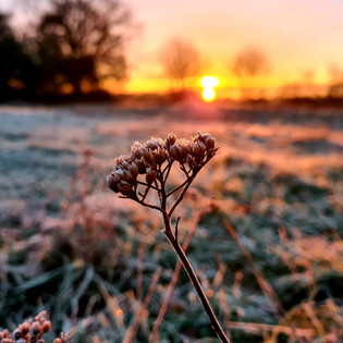 The morning sun rise