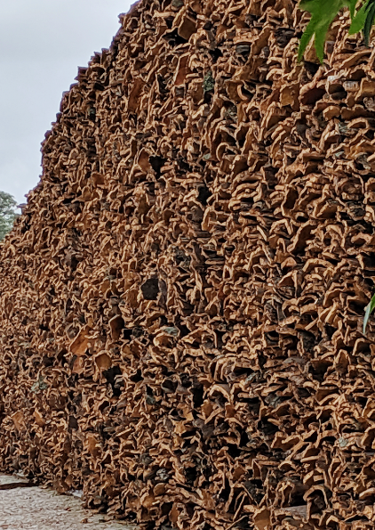 Cork bark strips left in the sun to dry out
