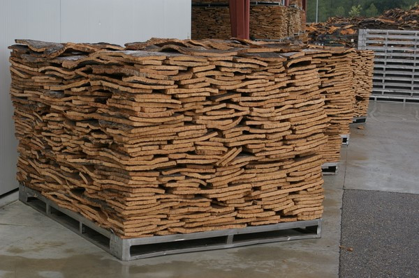 Cork planks that have been flattened by boiling