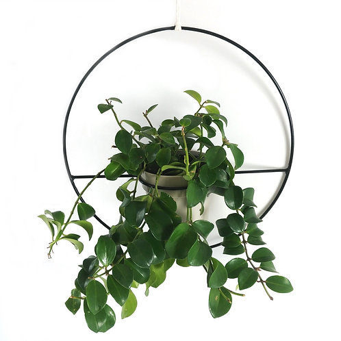 Black steel hanging planter with plant