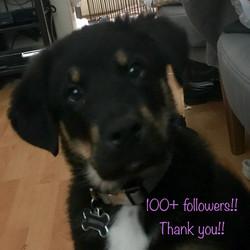 Griffyn has 100 followers