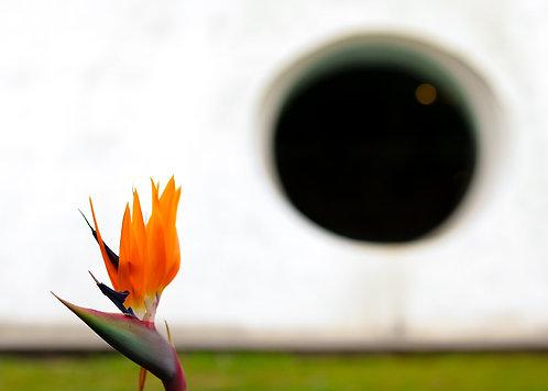Fotografia Círculo e Flor