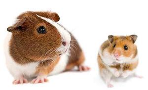 GP and Hamster.jpg