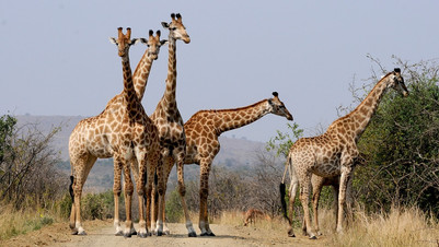 south-africa-927280_960_720.jpg