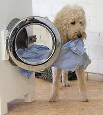 Assistenzhund_räumt_Waschmaschine_aus.jp