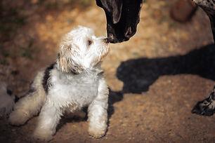 Begegnung, Hunde, freundlich, Training