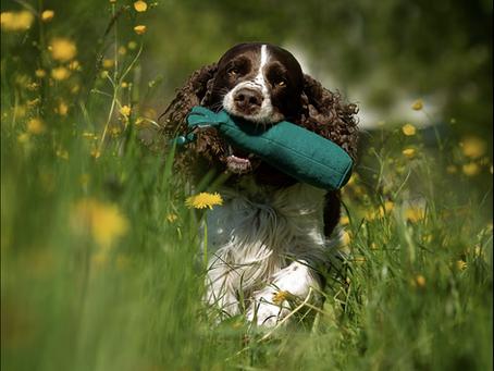 Hundesport – immer gesund?