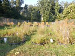 Wetland plants at peak growth