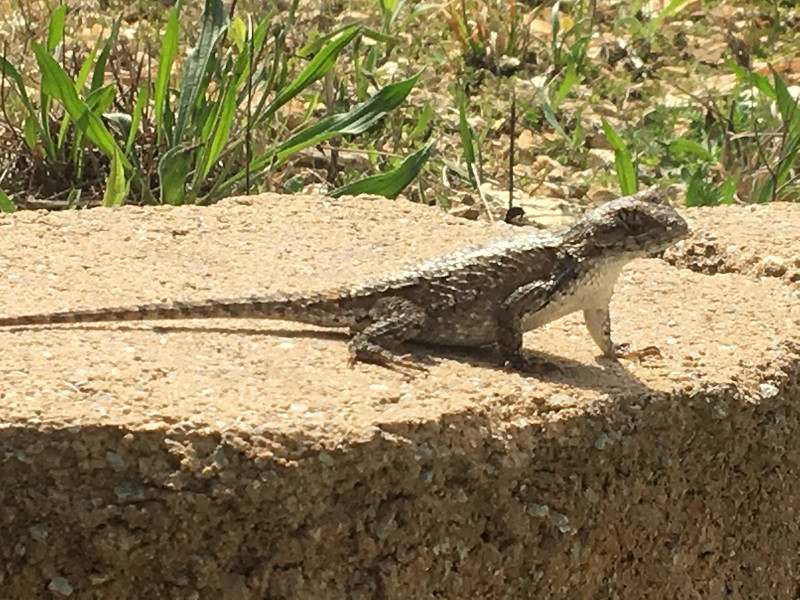 Photo of Lizard at Well Being Retreat Center in Tazewell, TN