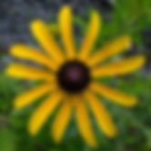 Photo of Yellow Flower at Well Being Retreat Center