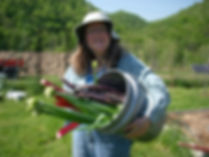 Photo of Garden produce at Well Being's Organic Garden
