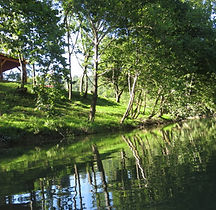 Picnic Area from the River.JPG