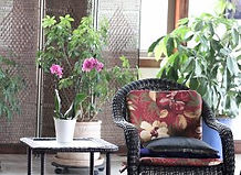 Plants in the Meeting Room create a meditative atmosphere for retreats