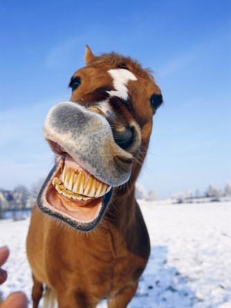 Horses NEED dentists too!