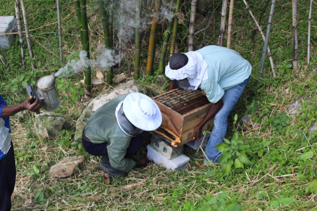 beehivesandbeekeepers