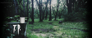 A roll of toilet paper sits on a stump in the woods in this 2014 image of PT, the playable teaser by Kojima Productions and Konami.