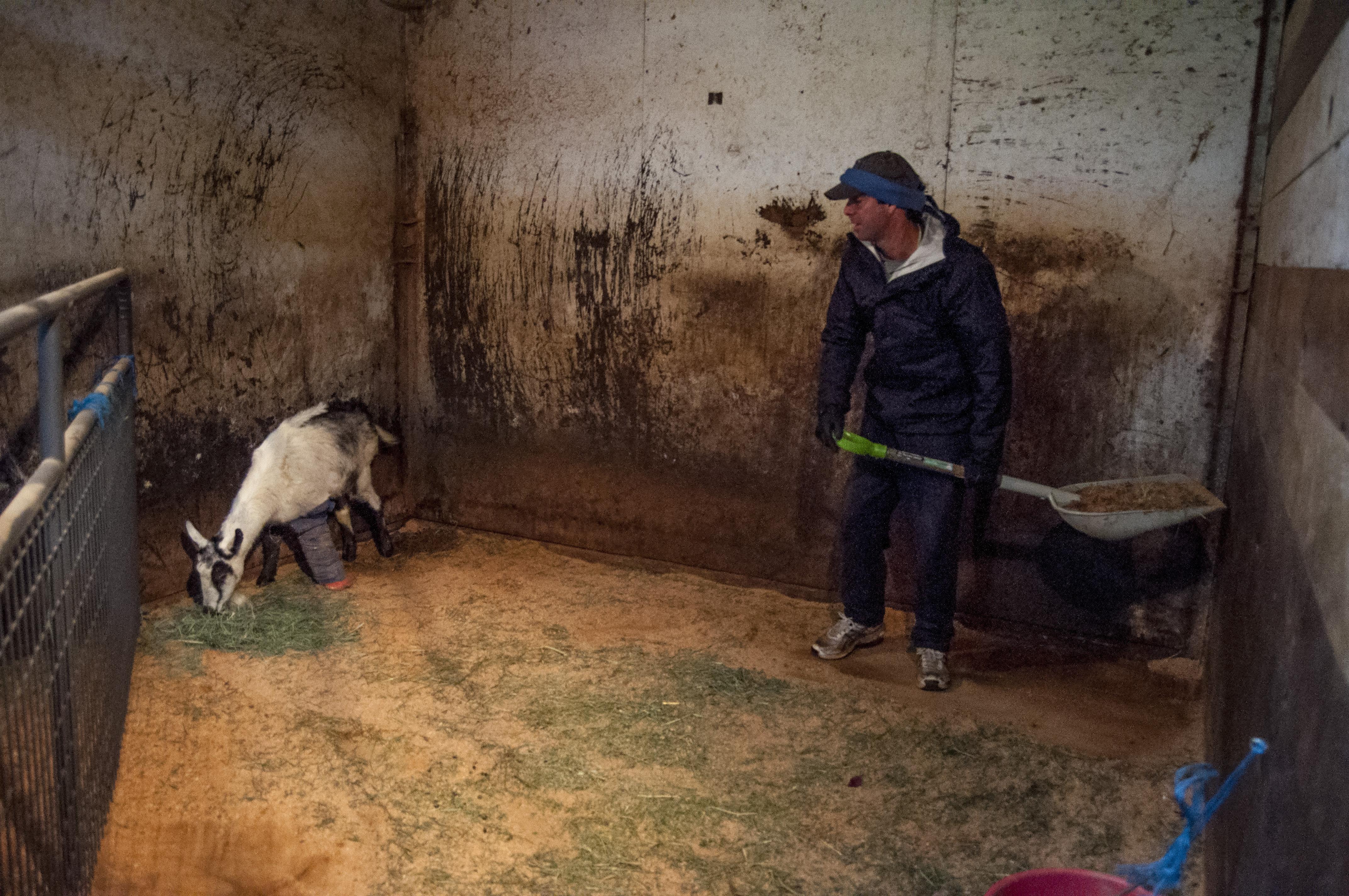 Dan and Goat